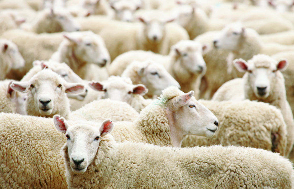 Schafschurwolle, Produkte aus Schafschurwolle